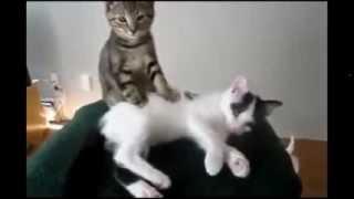 20 мин НЕРЕАЛЬНОГО СМЕХА с котами, март 2014 Funny Cats Compilation 20 min Часть 4