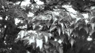 映画情報:「蜘蛛の糸」 監督:秋原正俊 出演:平幹二朗、高畑こと美、...