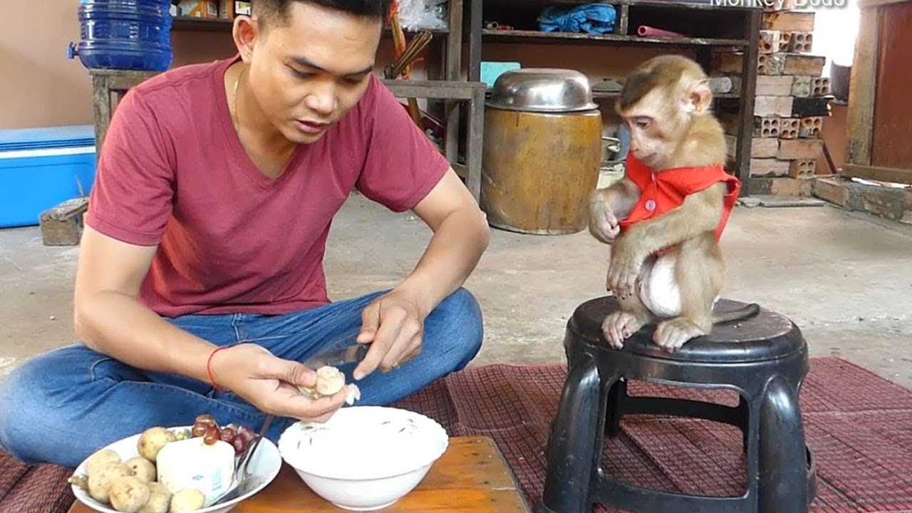 Wow Dad Teach Dodo To Eat Healthy Fruits Mixed Milk, Dodo Like So Much