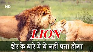 Amazing Facts About Lion |  शेर के बारे में ये नहीं पता होगा | Strange Facts