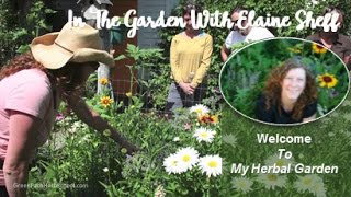 Green Path Herb School - Herbalist Elaine Sheff welcomes you to her...
