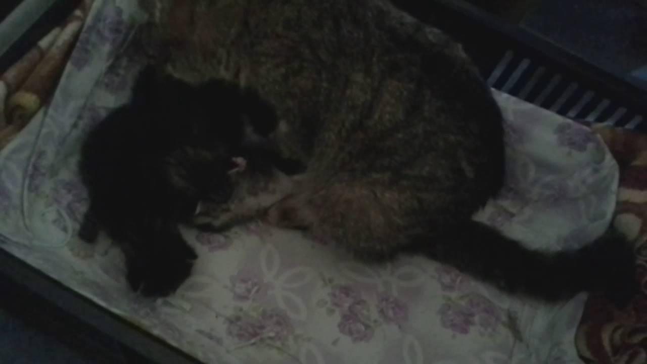 Kompilace černé kočičky Creampie