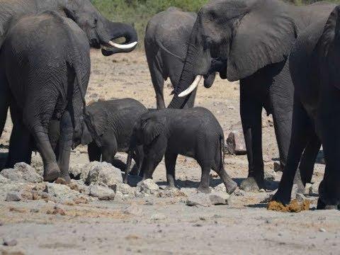 Botswana 2017 Chobe national park