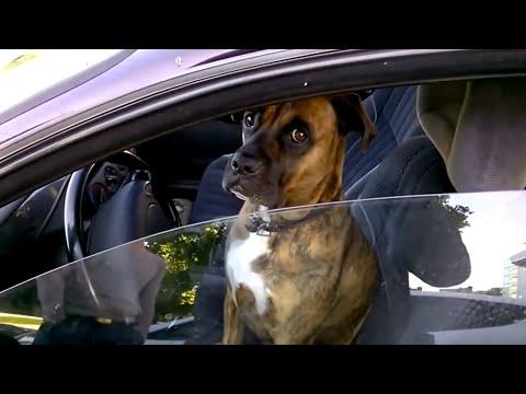 ComedyTV #2 Автомобильные приколы с девушками за рулем, дтп