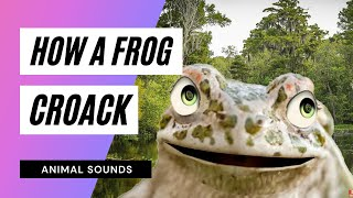 The Animal Sounds: Frog Croak - Sound Effect - Animation