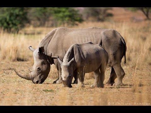 ชีวิตสัตว์มหัศจรรย์ ตอน การเอาชนะความแห้งแล้งในแทนซาเนีย