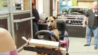 Dogs Taught To Drive For Animal Adoption Campaign
