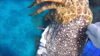 那覇の海人と一緒に魚突きに行ってきました♪ 突いた魚とクブシミは全て...