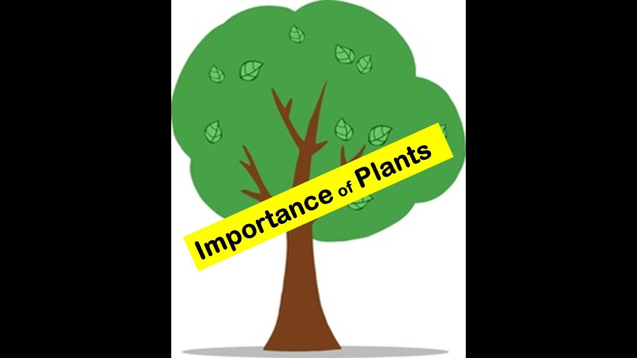 importance of green plants Green plants are not just important to the human environment, they form the basis for the sustainability and long-term health of environmental systems.