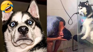 Cute Dogs And Cats That Will Make You Laugh 😂 - Funny Animals Compilation #3