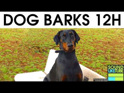 DOG BARKING [12 Hours Sound Effect]
