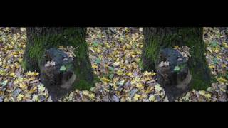 Autumn forest after rain 3D! Relaxing meditation! 3d vr video ( Google Cardboard )