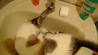 minye  toma agua na pia