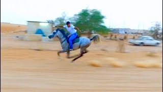 Gallup arabian horse with sword استخدام السيف بااقصى سرعات الخيل - ماجور ودهماء