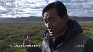 天堂上的綠毯——西藏當雄