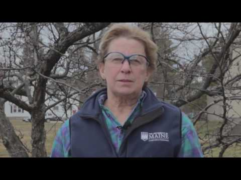 How To Prune A Crabapple Tree Youtube