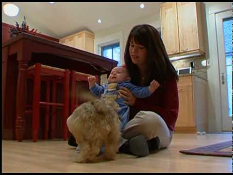 Children and Pets: Pros & Cons of Owning a Pet