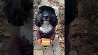 Harry the Adorable Delivery Dog || ViralHog