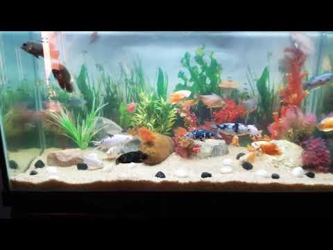 4 feet aquarium fish tank   After a week without water change!