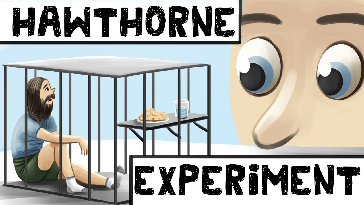 Download The Hawthorne Effect (Definition + Examples)