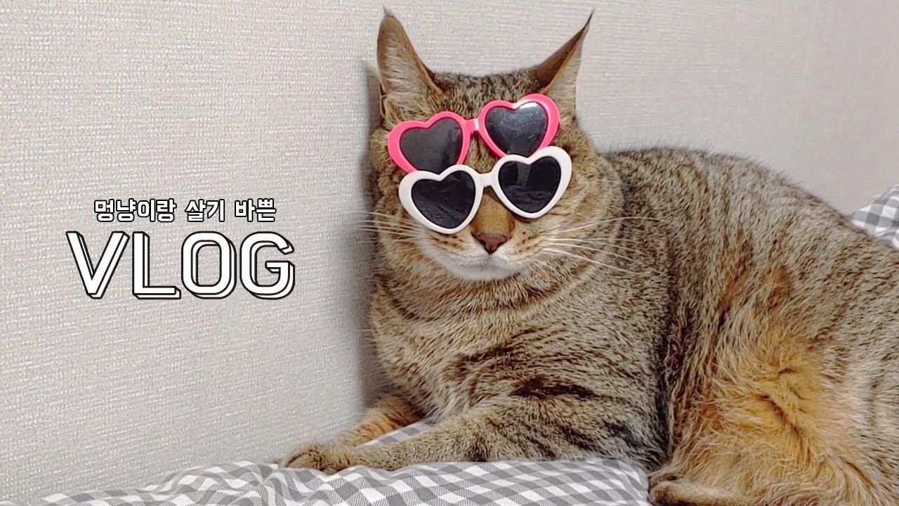#VLOG │멍냥극장│친구네집 방문 브이로그│#집사일상 #고양이일상 #고양이소개