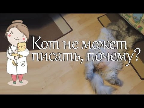 Вопрос: Надо ли вести к ветеринару кота, если он сам не умывается, это нормально?