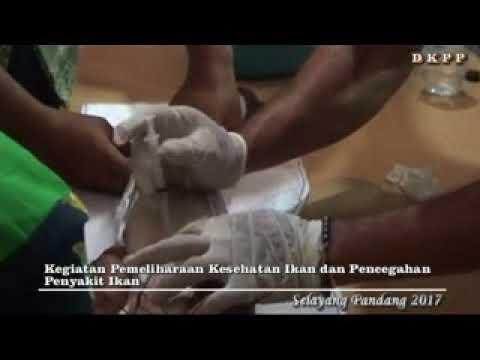 Evaluasi Kegiatan DKPP Kabupaten Tegal 2017