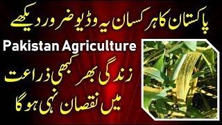 Pakistan Agriculture | Pakistan Agriculture 2019 | agriculture in pakistan