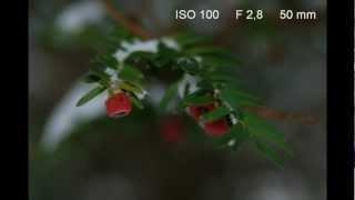 Nikon D80 Sample Photos