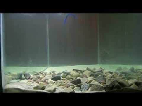Yum Paddletail VS. Yamamoto Senko bass fishing lures