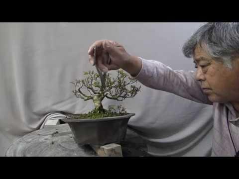 Bonsai master trim drastically and change anything.