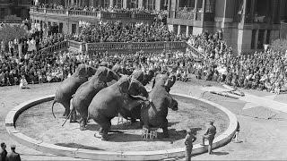Elephants No Longer to Perform at Barnum & Bailey Circus