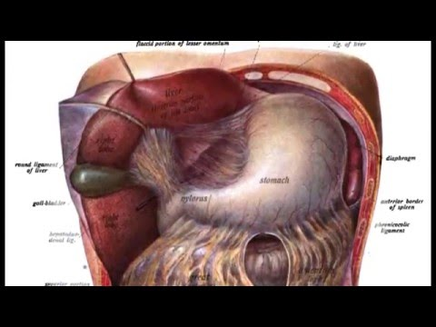 Aids Digestion | Digestive system diseases...