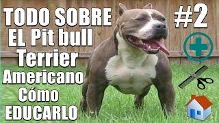 Pitbull terrier americano - Educación desde cachorro - Cuidados - Salud - Origen