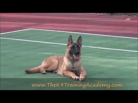 The K9 Training Academy