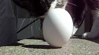 Vernal Equinox Egg Stand
