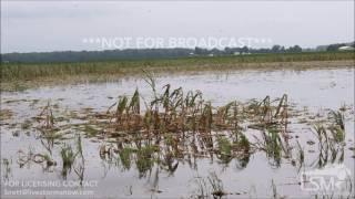 07-22-2017 Lima, Ohio Flooding - Destroyed Crops