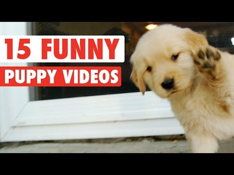 15 Funny Puppy Pet Video Compilation 2016