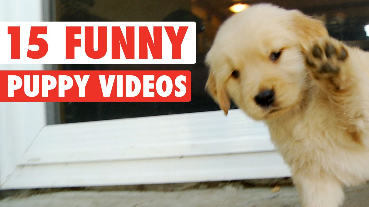 15 Funny Puppy Pet Video Compilation 2016 Youtube