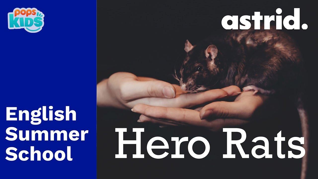 SUMMER SCHOOL - Hero Rats - Chương trình tiếng anh mùa hè cùng POPS Kids
