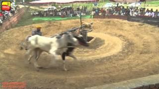 FARWALA (Jalandhar)    ਫਰਵਾਲਾ (ਜਲੰਧਰ)    ਬਲਦਾਂ ਦੀਆਂ ਹੱਲਟ ਦੌੜਾਂ - 2016 ਦੀ ਜੇਤੂ ਜੋੜੀ    Full HD   
