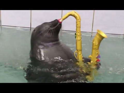 Super-cute Baikal seals master sax playing & painting
