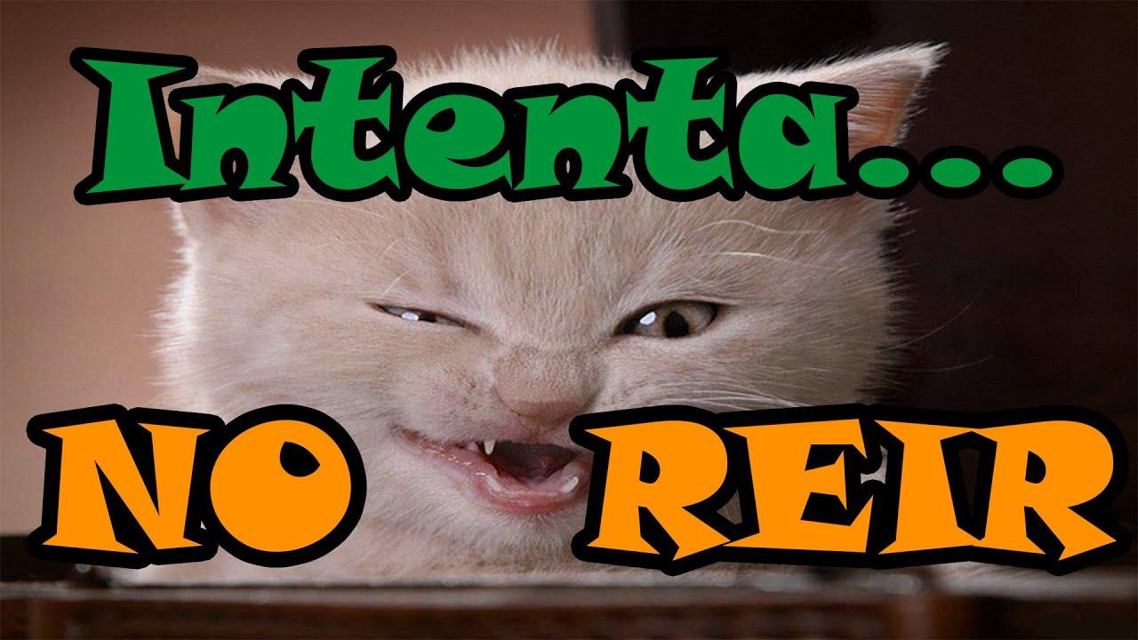 Reto intenta ver este video sin reirte los gatos m s - Para ver fotos ...