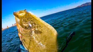 I Got a HALIBUT!!!!! {Catch Clean Cook} Spearfishing Mag Bay, Mexico