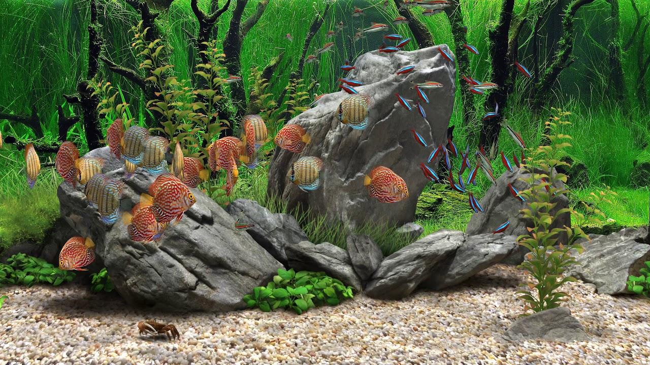 дреам аквариум тихая установка встречи вызывали