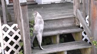 улётные пьяные кошки