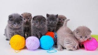 Опасные игрушки для котят