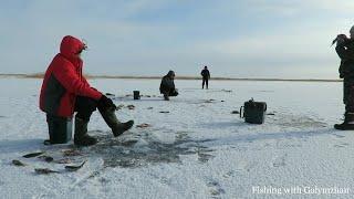Попали на жор окуня. Озеро Зайсан. Первый лед.