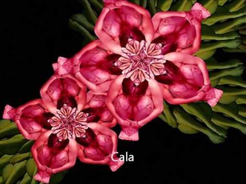 Las Flores Mas Hermosas De Colombia Youtube
