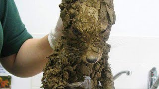 Workers Thought They'd Found A Muddy Puppy  But They Cleaned It Off And Got The Cutest Surprise thumbnail
